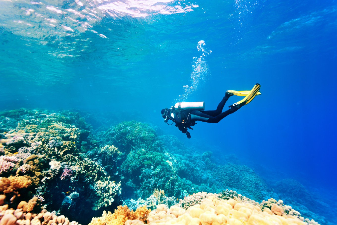 Diving Equipment That Must Be Used To Be Safe And Comfortable